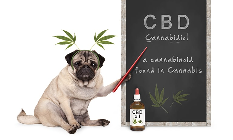 CBD for pets NZ